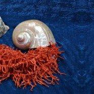 Corallo Conchiglie