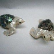 Tartarughe in madreperla nera o haliotis